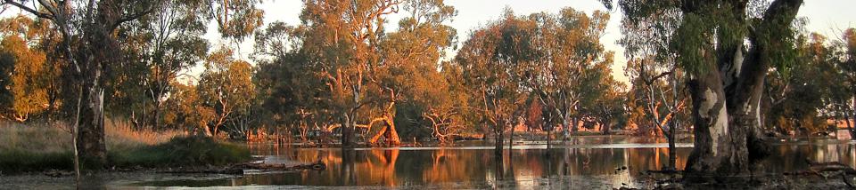Powlett-Swamp