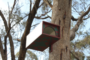 Kookaburra nest box