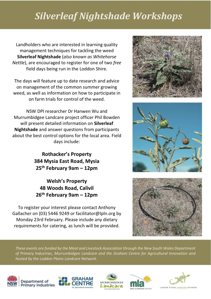 Silverleaf Nightshade Workshops Flyer