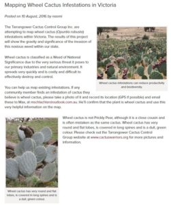 Mapping wheel cactus in Victoria
